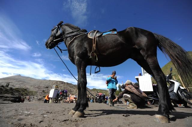 Du khách có thể cưỡi ngựa khi đến vùng núi Bromo ở Indonesia