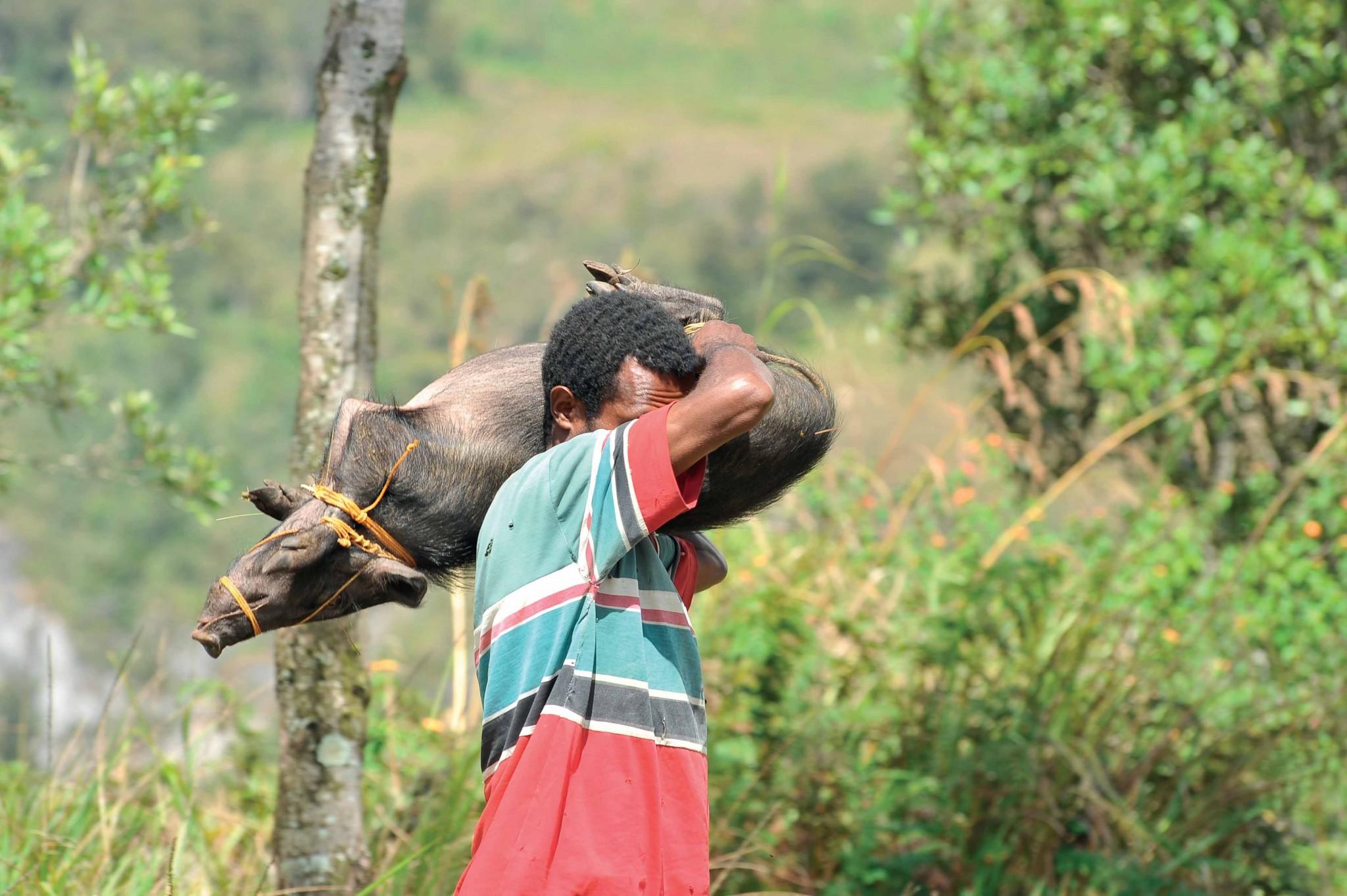cư dân thung lũng Baliem, Indonesia