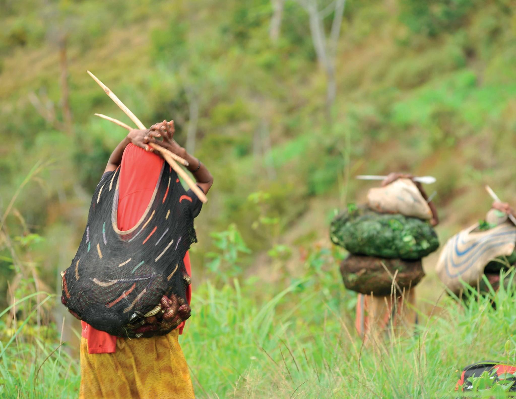 Phụ nữ vùng Baliem dùng đầu gùi lương thực vượt núi.