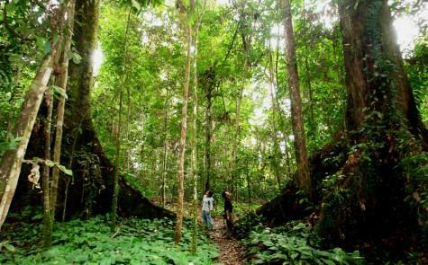 dia diem du lich Borneo Jungle