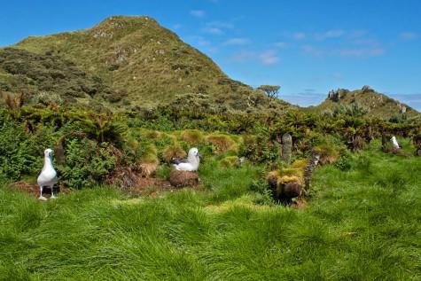 dia diem du lich sinh vat tren dao Tristan da Cunha
