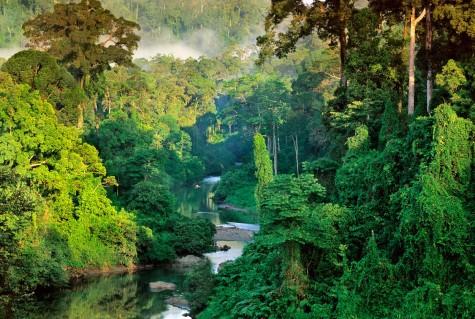 dia diem du lich trekking qua Borneo