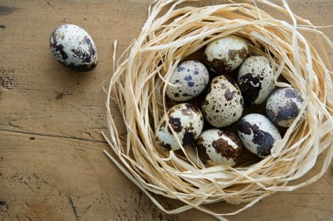 Có ai ngờ đâu những quả trứng nhỏ xinh này lại là những người bạn bổ trợ trong việc làm thỏa mãn các nàng.