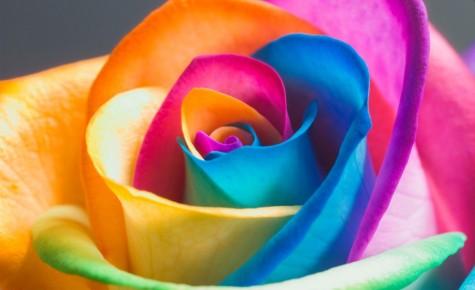Ý nghĩa các loại hoa hồng cho ngày quốc tế phụ nữ - elleman - 1
