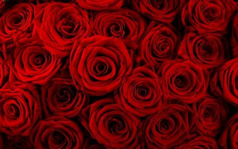 Ý nghĩa các loại hoa hồng cho ngày quốc tế phụ nữ - elleman - 2