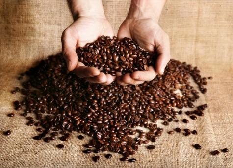 hương cà phê - picking coffee - elle man