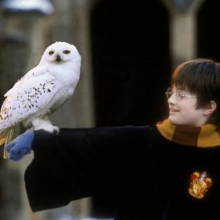 Truyện Harry Potter & 8 sự thật thú vị
