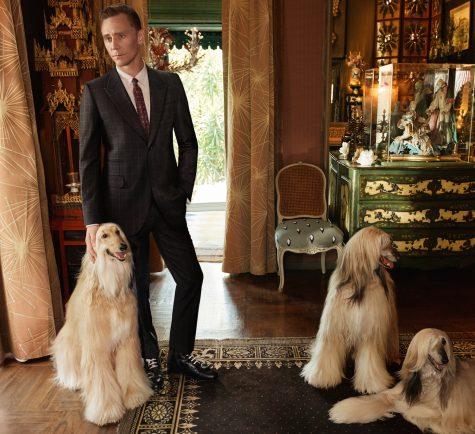 Bạn diễn của Tom Hiddleston là 3 chú cho Afghan Hound quyến rũ.