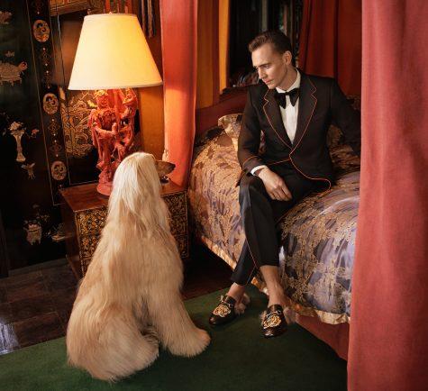 Tuy hụt mất hợp đồng quảng cáo với Armani, Tom Hiddleston là sự lựa chọn hoàn hảo cho những thiết kế suits của Gucci