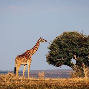 Du lịch Kenya - Đông Phi lướt ngoài cửa sổ