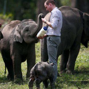 Hoàng tử William đến Việt Nam: cuộc chiến chống buôn bán động vật hoang dã