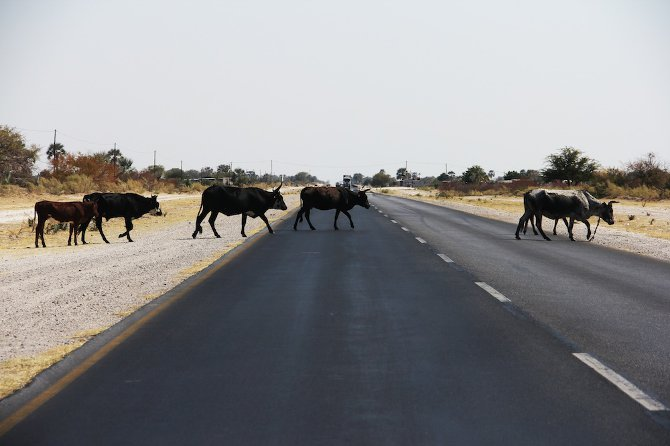 namibia - elle viet nam