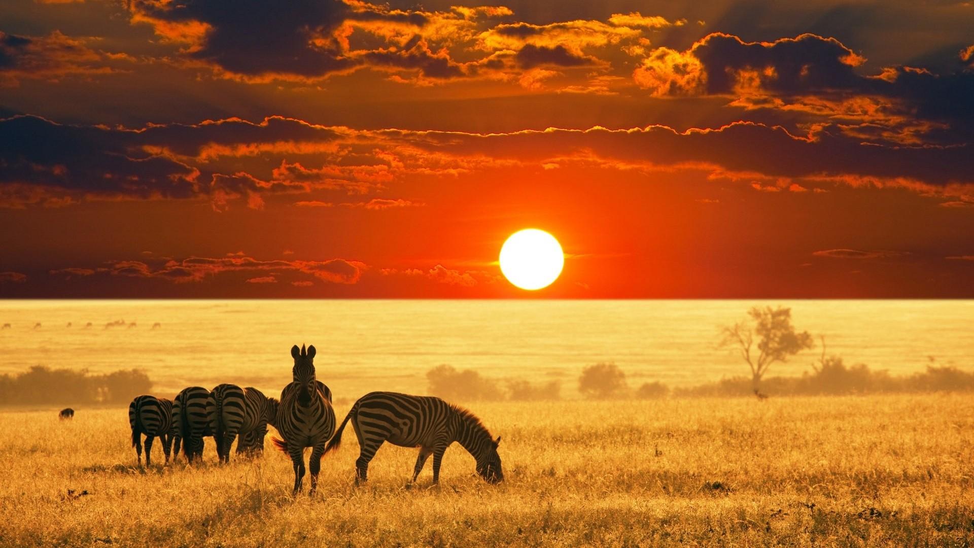 dia diem du lich _ safari _ elleman11