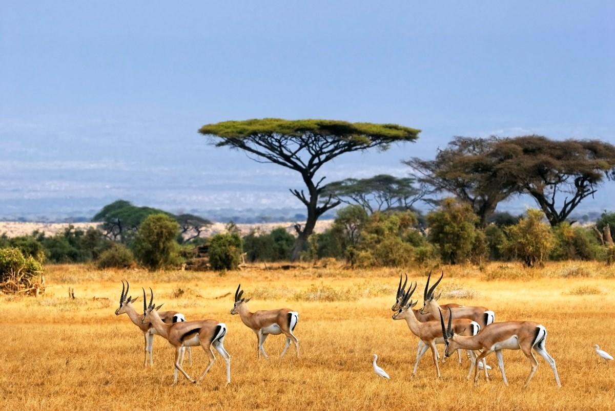 dia diem du lich _ safari _ elleman12