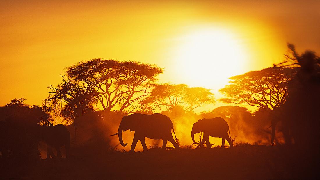 dia-diem-du-lich-_-safari-_-elleman14