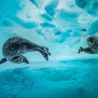 13 bức ảnh thiên nhiên tuyệt đẹp của năm 2017