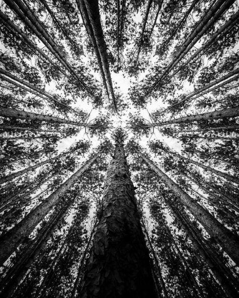 Ngắm những bức ảnh đẹp đen trắng của nhiếp ảnh gia Jackson Peterson