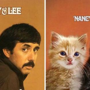 Bộ ảnh bìa album ca nhạc được tái hiện với ... những chú mèo