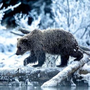 52 bức ảnh thiên nhiên đẹp nhất 2017 theo National Geographic