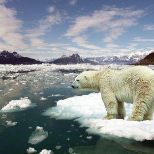 """Trái Đất đang """"hướng"""" tới thời kỳ tuyệt chủng hàng loạt thứ 6, kể từ thời khủng long"""
