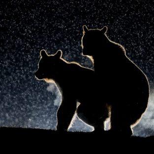 13 bức ảnh động vật hoang dã hài hước nhất 2017