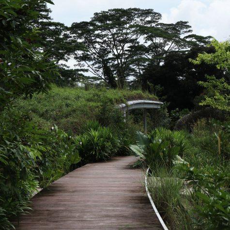 du lich singapore - elle man 5