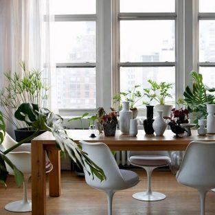 Cải thiện không gian sống với cây cảnh tốt cho sức khỏe