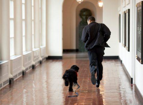Barack obama ngai cuu tong thong ma ban khong the nao quen elle man 12