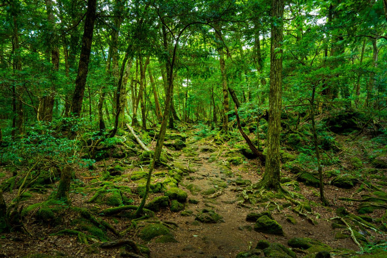 Khu rừng tự sát là địa điểm thú vị nhưng dĩ nhiên không dành cho những ai muốn trải nghiệm du lịch Nhật Bản. Ảnh: Verdict