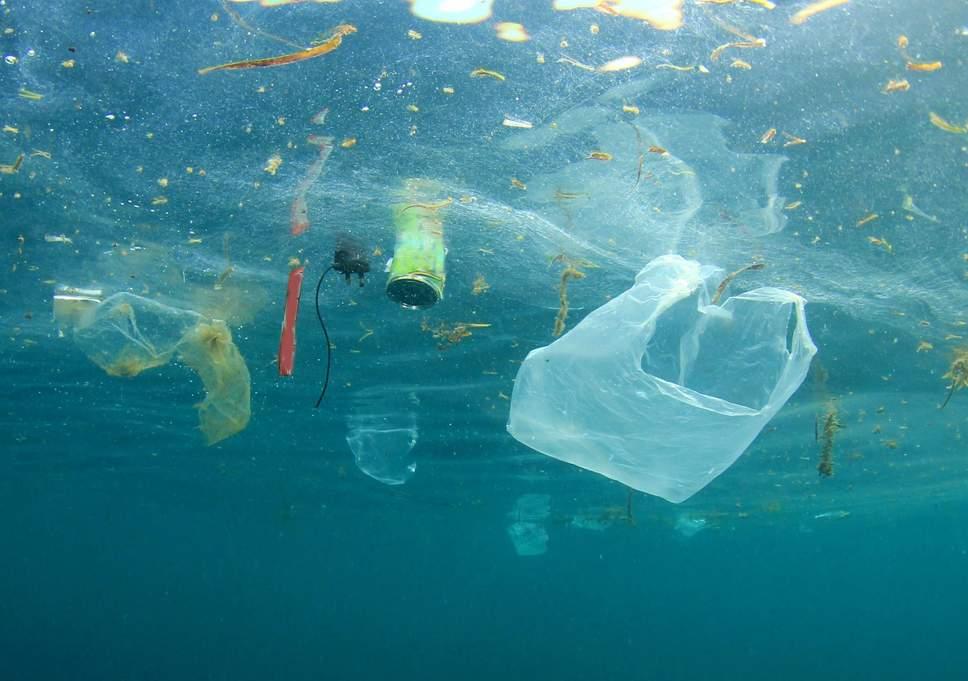 Nếu không ngăn cản tình trạng ô nhiễm đại dương, trong tương lai xa các sinh vật biển sẽ biến mất hoàn toàn. Ảnh: Evening Standard