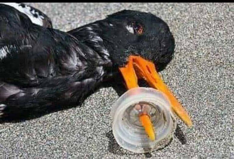 Bạn chỉ nhìn thấy cái chết của con chim. Còn việc nó mất bao nhiêu thời gian để đi tới cái kết của hành trình sống thì liệu rằng chúng ta có cảm thấy được? Ảnh: Whatz Viral