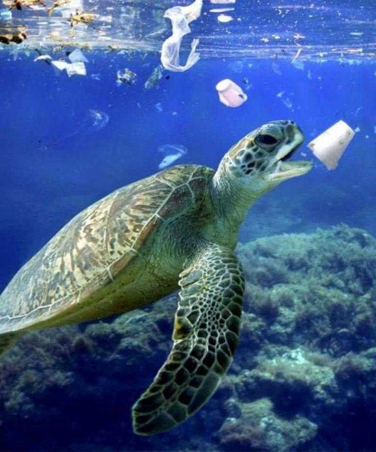 Nếu không bảo vệ môi trường thì sẽ còn bao nhiêu động vật biển bị tuyệt chủng? Ảnh: Whatz Viral
