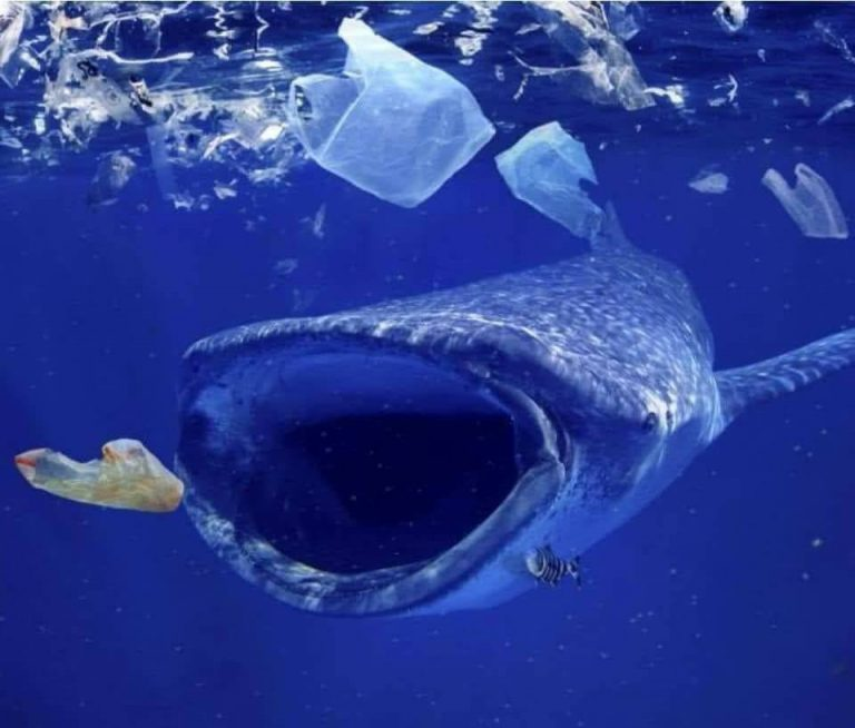 Nếu không bảo vệ môi trường thì chúng ta sẽ còn chứng kiến bao nhiêu cái chết của những động vật to lớn nhất hành tinh? Ảnh: Whatz Viral