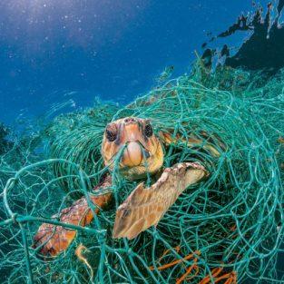 15 bức ảnh khiến bạn phải thay đổi nhiều hơn để bảo vệ môi trường