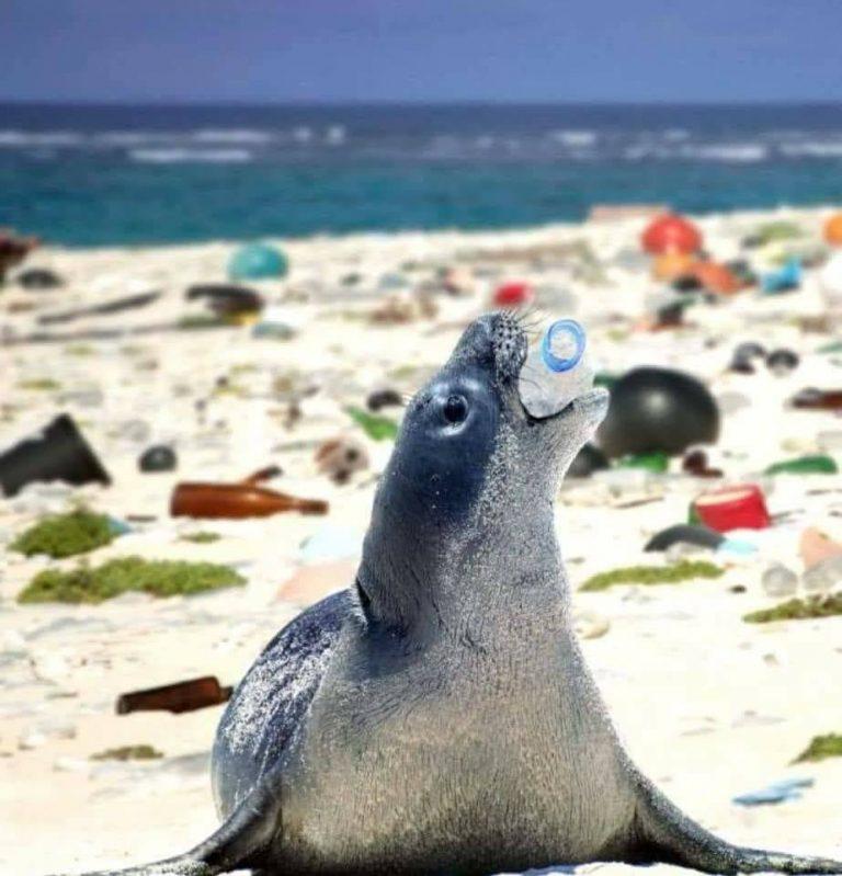 """Và chiếc chai nhựa sẽ là """"bữa ăn"""" thịnh soạn cho chú sư tử biển. Ảnh: Whatz Viral"""