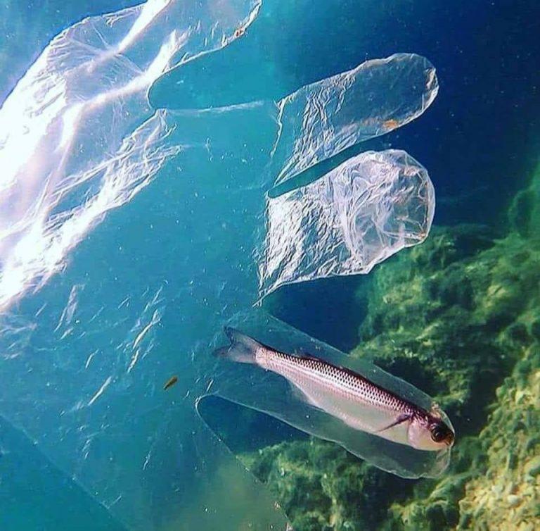 """Tại sao chiếc bao tay nhựa lại nằm giữa đại dương? Ngôi nhà mới của chú cá trích chăng? Và phải mất bao lâu để """"ngôi nhà"""" này bị phân hủy? Một trăm năm ! Ảnh: Whatz Viral"""