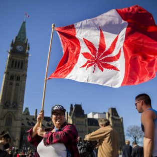 """Cần sa """"cháy hàng"""" trên toàn Canada chỉ 2 ngày sau khi được hợp thức hóa"""