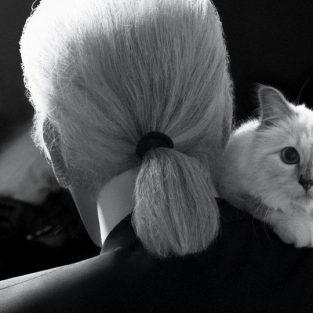 Karl Lagerfeld đã để lại cho mèo cưng Choupette một gia tài khổng lồ đến mức nào?