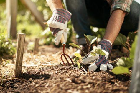 hạnh phúc trong cuộc sống-đàn ông đang làm vườn