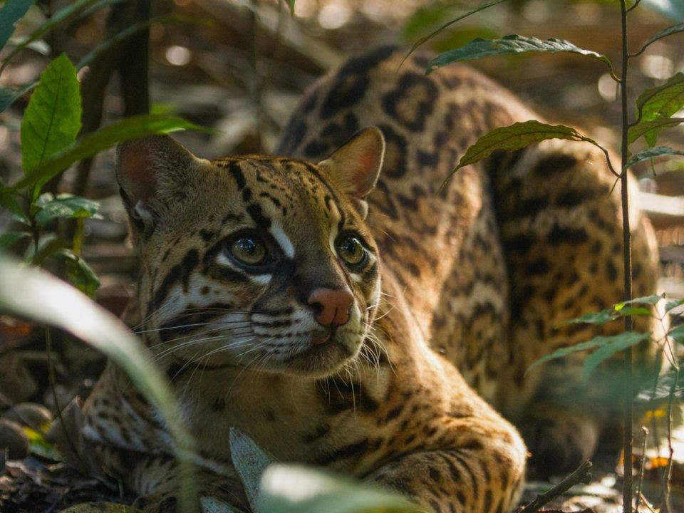 môi trường thế giới - động vật đang bị đe dọa sự sống bởi khí hậu