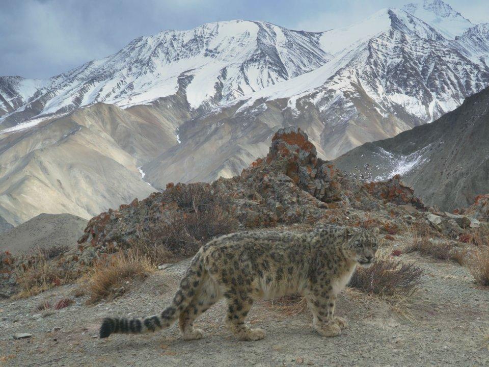 môi trường thế giới - môi trường sống của động vật bị thu hẹp