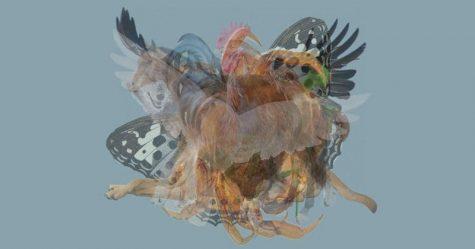 Trắc nghiệm hình ảnh: tính cách thật sự qua con vật đầu tiên bạn nhìn thấy