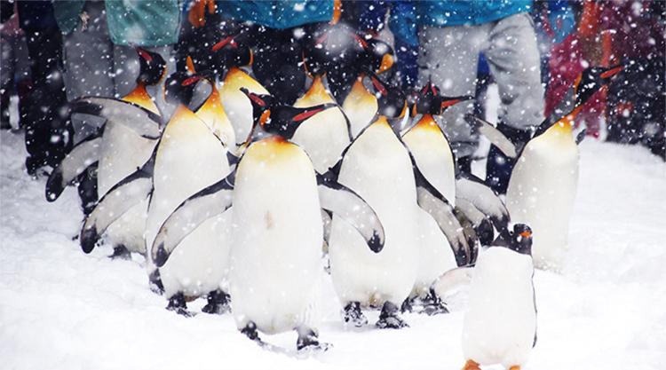 penguin-elle man-1119