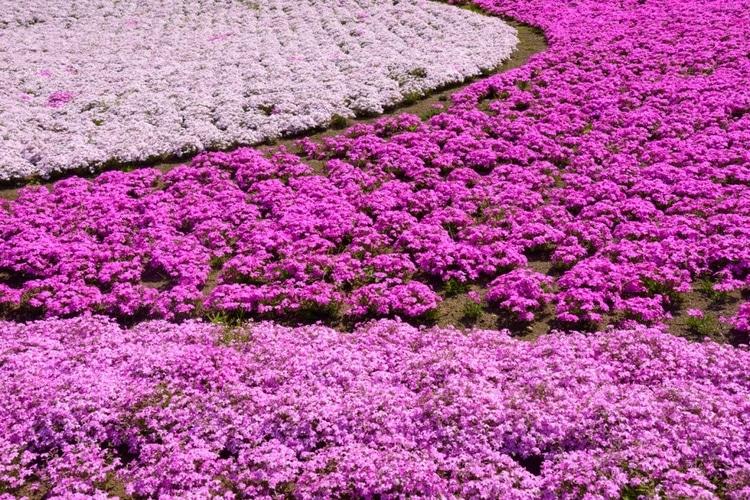 flower-nguoi nhat ban-elleman-1219