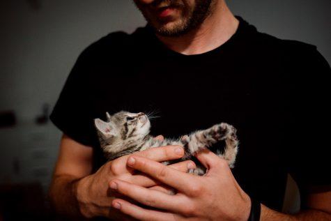 Trắc nghiệm Kokology: Chú mèo nào thể hiện bản chất của bạn?