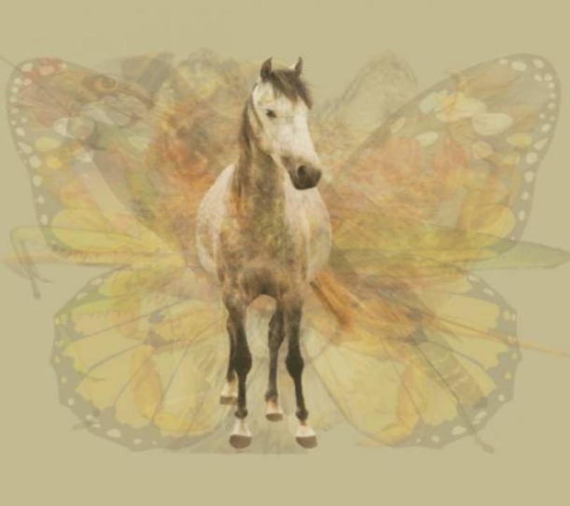 trắc nghiệm hình ảnh - con ngựa.