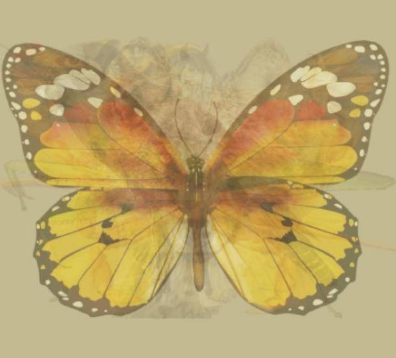 trắc nghiệm hình ảnh - bươm bướm.