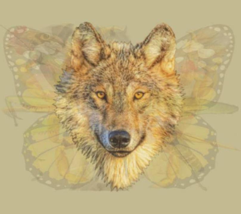 trắc nghiệm hình ảnh - chó sói.