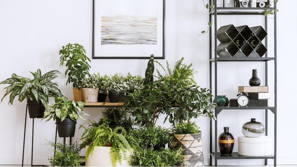 Không gian nội thất có cây xanh.