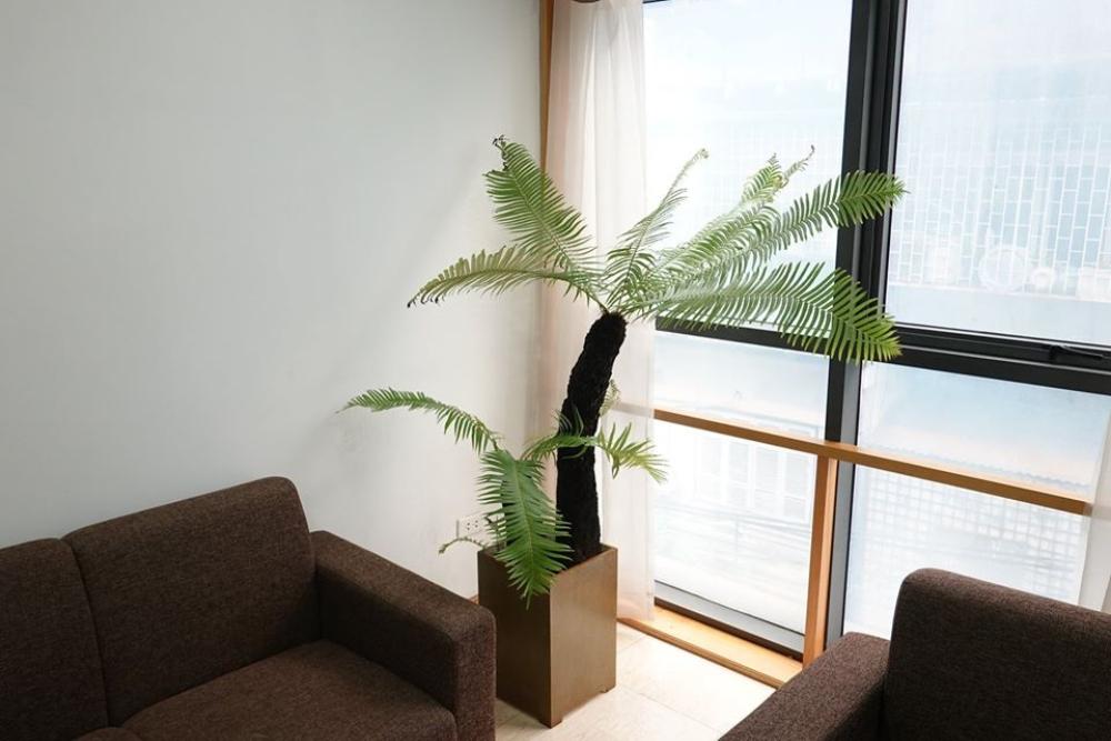 trồng cây dương xỉ trong nhà.